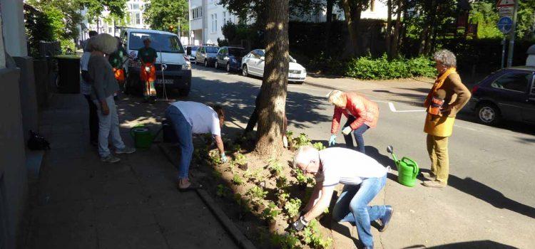 Baumscheiben zu Kleingärten – Neues Projekt des Nachbarschaftsrats im Ostmannturmviertel